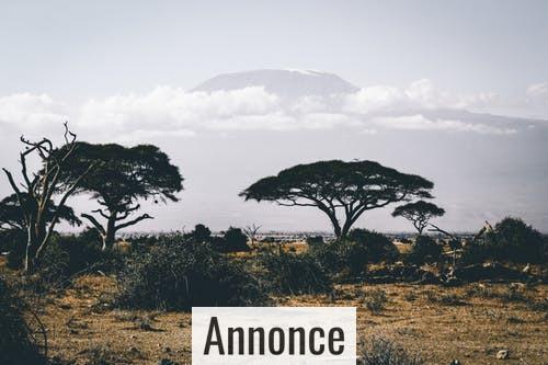 Rejseguide: Tag på eventyr i Afrika