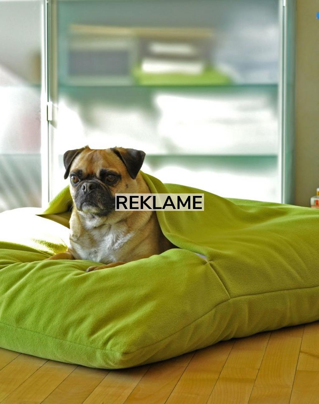 Sådan kommer du hjem med den helt rette hundeseng